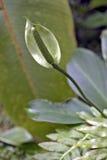 Groene Anthurium op de donkere achtergrond van het bos Royalty-vrije Stock Foto's