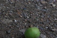 Groene appelono het grint stock foto's