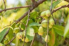 Groene appelwelpen naast de takken op de boom stock afbeeldingen