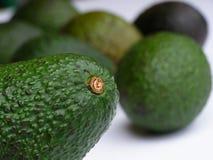 Groene avocado stock foto