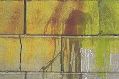 Groene bakstenen muur Royalty-vrije Stock Afbeelding