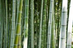 Groene bamboe bosachtergrond Stock Afbeelding
