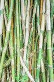 groene bamboeachtergrond Royalty-vrije Stock Afbeeldingen
