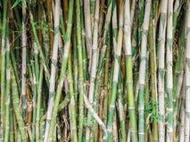 groene bamboeachtergrond Royalty-vrije Stock Afbeelding