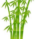 Groene bamboeinstallaties op witte achtergrond Royalty-vrije Stock Foto's