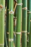 Groene bamboesteel stock fotografie