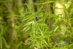 Groene bamboetextuur stock foto's