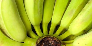 Groene banaan Royalty-vrije Stock Foto's