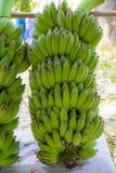 Groene banaan Stock Foto