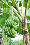 Groene banaan en bloem Stock Afbeelding