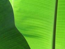 Groene Banaanbladeren, textuur en patroon op de oppervlakte van verlof stock afbeelding