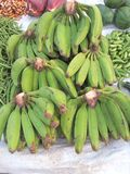 Groene bananen Royalty-vrije Stock Fotografie