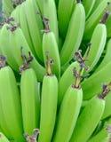 Groene bananen die op boomclose-up hangen royalty-vrije stock fotografie