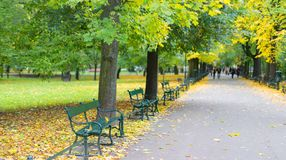 Groene banken in het park tegen de achtergrond van bomen Royalty-vrije Stock Foto