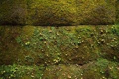 Groene bemoste bakstenen muurachtergrond royalty-vrije stock foto