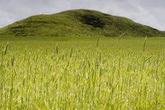 Groene Berg Stock Afbeeldingen