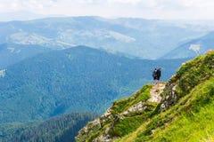Groene bergen van de Oekraïne, de Karpaten Stock Foto's