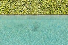 Groene blad achtergrondwijnstokmuur met Groen gegolft zwembad Royalty-vrije Stock Afbeeldingen