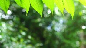 Groene blad en bokeh achtergrond stock videobeelden
