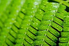 Groene blad en waterdalingen Royalty-vrije Stock Afbeeldingen
