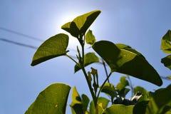 Groene blad en zonneschijn royalty-vrije stock fotografie