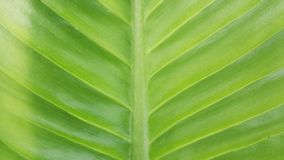Groene blad macro dichte omhooggaande achtergrond Royalty-vrije Stock Foto