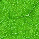 Groene blad naadloze textuur Royalty-vrije Stock Afbeelding