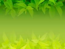 Groene blad natuurlijke achtergrond Stock Foto's