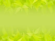 Groene blad natuurlijke achtergrond Stock Foto