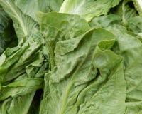 Groene blad planten-; e voor gezondheid en vitaliteit en voeding royalty-vrije stock fotografie