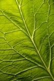 Groene bladachtergrond Royalty-vrije Stock Foto's