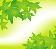Groene bladachtergrond stock afbeeldingen