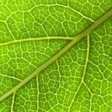 Groene bladachtergrond Stock Afbeelding