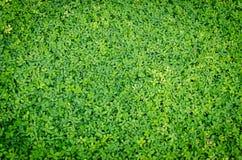 Groene bladachtergrond Royalty-vrije Stock Foto