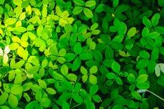 Groene bladachtergrond in aard met Zon zachte verlichting royalty-vrije stock fotografie