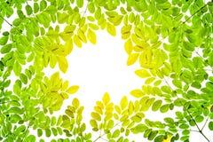 Groene bladachtergrond met licht en exemplaarruimte Royalty-vrije Stock Foto