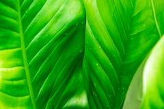 Groene bladachtergrond met regendalingen stock foto's