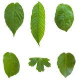 Groene bladeren. Royalty-vrije Stock Foto's