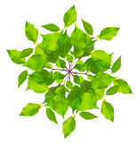 Groene bladeren Royalty-vrije Stock Afbeeldingen