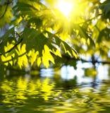 Groene bladeren Stock Afbeelding