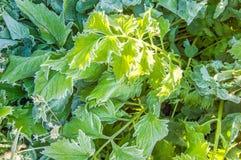 groene Bladeren Stock Fotografie