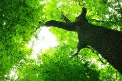 Groene bladeren Royalty-vrije Stock Foto's