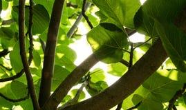 groene Bladeren Stock Foto's