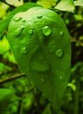 groene Bladeren Royalty-vrije Stock Afbeelding