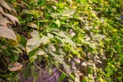 groene Bladeren Groene achtergrond met bladeren en cementmuur Stock Afbeeldingen