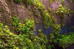 groene Bladeren Groene achtergrond met bladeren en cementmuur Stock Foto's