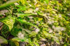groene Bladeren Groene achtergrond met bladeren en cementmuur Stock Afbeelding