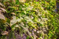 groene Bladeren Groene achtergrond met bladeren en cementmuur Stock Fotografie