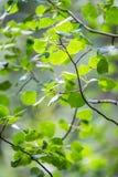 Groene bladeren achtergrondpatroontextuur stock foto's