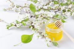 Groene bladeren, boeket van witte de lentebloemblaadjes, bloemenachtergrond Honing en honingsdipper op witte oppervlakte stock fotografie